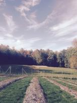 Blueberry - Sweet Season Farm