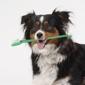 Encino Veterinary Clinic - Encino, CA