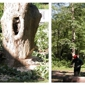 Glynn Tree Experts - Hanover, MA