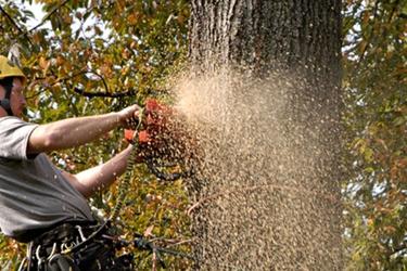 Aaron's Perfect Cut Tree Service