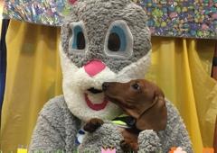 Village Veterinary - Tequesta, FL. april 2017
