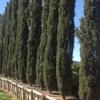 Big Tex Trees Nurseries