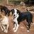 Alabama Angels Dog Rescue, Inc (non-profit) - CLOSED