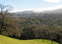 Ginny Kavanaugh Real Estate - Portola Valley, CA