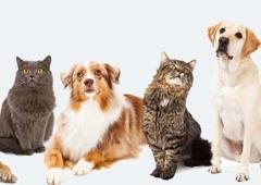 Pocatalico Animal Hospital - Charleston, WV