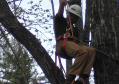 Arborist Masters Professional Tree Service - Greenville, SC