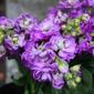 Pike Place Flowers - Seattle, WA