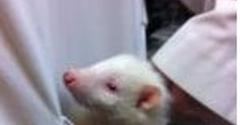 Santa Cruz Animal Clinic Inc - Brandon, FL