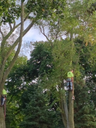 Universal Tree Service