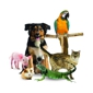 Animal Health Care Center - Arlington, TX