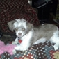 Pretty Paws Pet Stylist - Sanford, NC. Poochies new do!