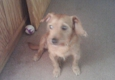 Luv UR Pet Sitters - Sevierville, TN