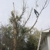 3 D Tree Care