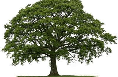 A-1 Brosch Tree Service Inc - Salem, OH