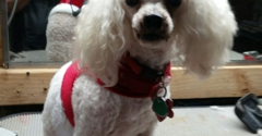 361 Pet Grooming & Boarding - Corpus Christi, TX. She is the warmest kindest groomer over ever met. Thanks for great job always .