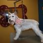 The Pet Club - Miramar, FL