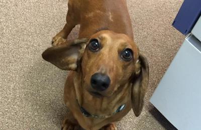 Belpar Pet Care Center - Canton, OH