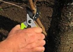 Ultimate Tree And Yard Work Phoenix Az