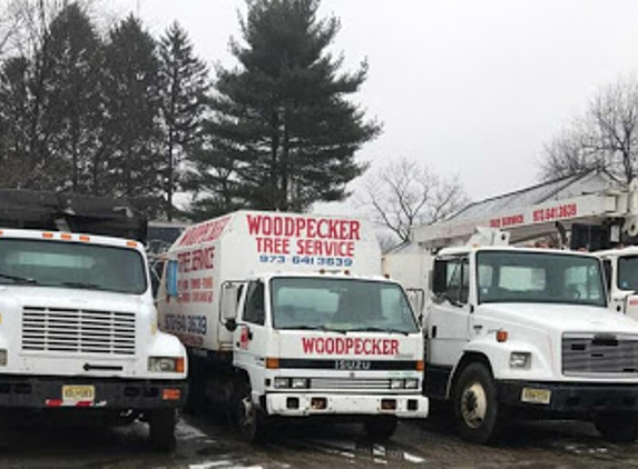 Woodpecker Tree Service