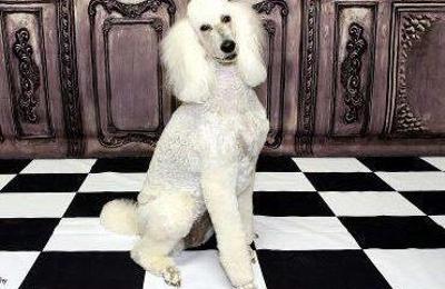 Dog gone beautiful 3821 34th st lubbock tx 79410 yp dog gone beautiful lubbock tx solutioingenieria Choice Image