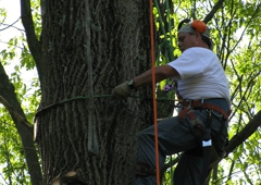 Acer Tree Service LLC - Trumbull, CT. Tree Service