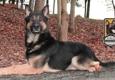 Pro Canine Center - Frenchtown, NJ