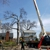 Pro-Stump Tree Service Inc.