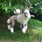 Canine Shear Heaven - Asheville, NC