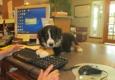 All Pets Animal Hospital - Bentonville, AR