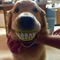 North Royalton Animal Hospital & Paws at Play Resort - North Royalton, OH. Charlotte with the ball gifted to her at a recent visit.