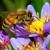 Monterey Bay Pest Control Inc.