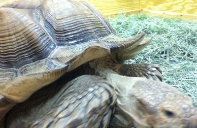 Buzz N' B's Aquarium & Pet Shop - Erie, PA
