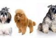 Country Club Pet Grooming - Tampa, FL
