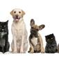Kennett Veterinary Clinic - Kennett, MO