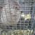 Trapper Ran Nuisance Wildlife