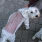 Dapper Dog - East Providence, RI