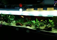 Conway Tropical Fish - Conway, WA