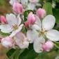 Apple Blossom Dentistry - Winchester, VA