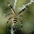 Bug Busters Do It Yourself Pest Control Of Bradenton