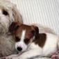Birch Hill Kennels - Northfield, NH. Pet Training in Northfield, NH
