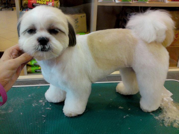 Yucaipa Dog Cat Grooming 34309 Yucaipa Blvd Ste F Yucaipa Ca