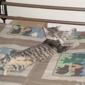 Memphis City Animal Shelter - Memphis, TN