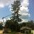 Pelican Tree Care LLC