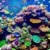 Coral Reef Inn & Suites