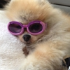 Soggy Dog Grooming & Pet Supplies