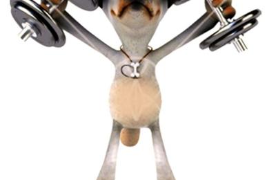 Iron Pet Mobile Grooming & Salon - Pembroke Pines, FL