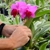 Odom's Orchids, Inc.