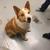 Washington County Lester C Howick Animal Shelter