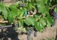 Foxfire Farms-Foxfire Natural - Ignacio, CO