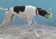 Hollydogs Inn Pet Hotel - Hollywood, FL